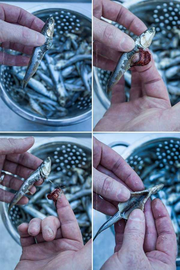How to clean anchovies or similar small fish. Step by step image grid.